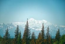 mountain tree service